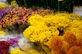 stock photo of taxco  - Yellow flowers in the market - JPG