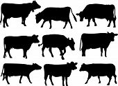 image of dairy cattle  - collection of cow silhouette  - JPG