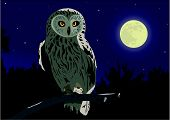 image of owl eyes  - The image of the owl sitting on a branch by a moonlight night - JPG