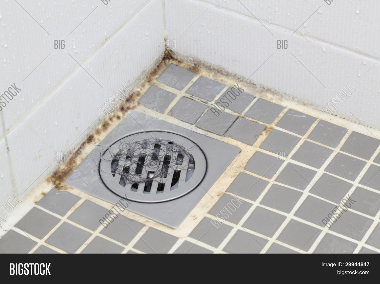 zwarte schimmel badkamer � msnoelcom