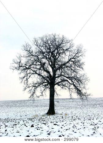Tree In A Winter Field 1