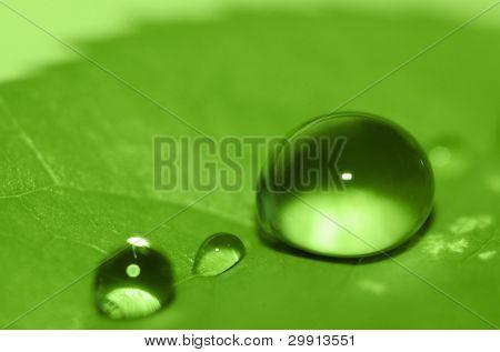 Wassertropfen auf einem grünen Blatt (shallow DOF)