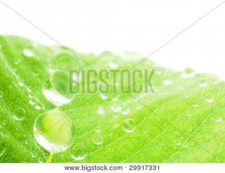 macro of water droplets on a green leaf; shallow (DOF); Series C2