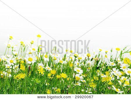 Margarida flores (DOF seletiva); Primavera série B3