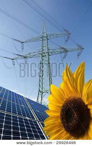 Solar Panels, Sunflower And Utility Pole With Wires