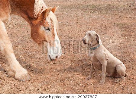 große Pferd und Hund