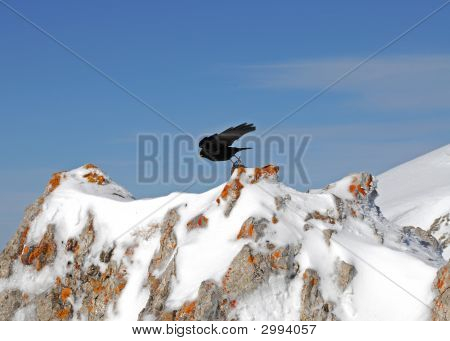 Bird In The Mountains