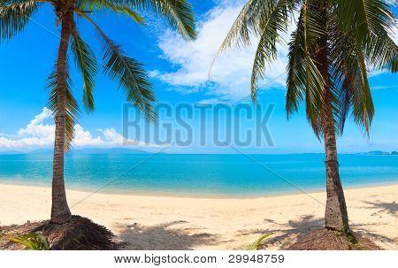 panoramic tropical beach with coconut palm. Koh Samui, Thailand, Bang Po beach