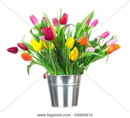 Bunch of tulips in tub isolated on white background