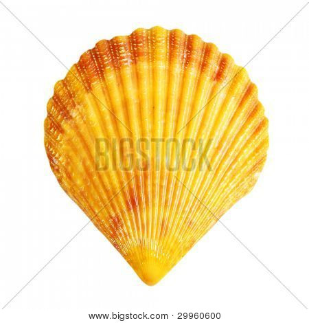 eine Shell isolated on white background