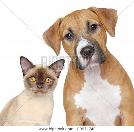 poster of Cat And Dog Portrait On A White Background