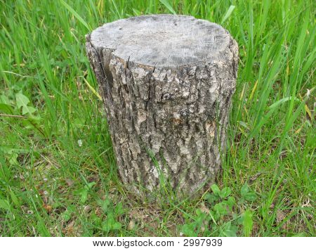 An Old Stub Of A Tree In The Grass