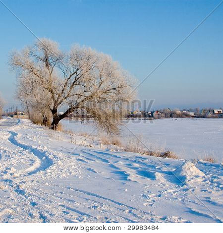 Beautiful Winter Landscape.