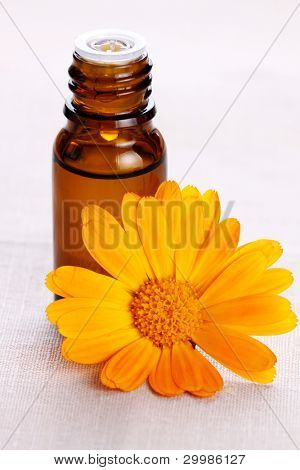 Close-up of organic oil with marigold flowers