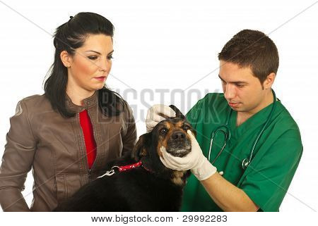 Vet Male Examine Ear Dog