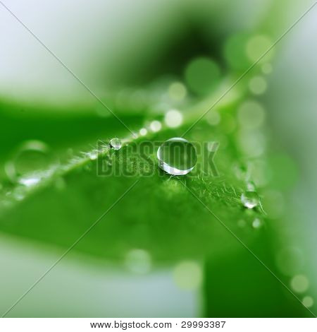 Beautiful water drop on the green leaf