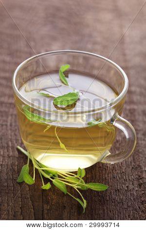 Herbal tea with fresh sage leaf
