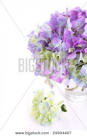 beautiful blumenstrauss von Hortensien mit Glasvase auf weißem hintergrund isoliert