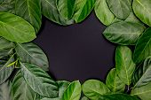 Green Leaf Ornament With Place In Center On Black Background. Summer Leaf Frame Top View Photo. Eleg poster