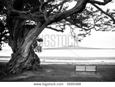 Bench Under Lone  Old Tree