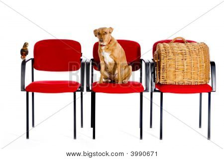Waitingroom Veterinary