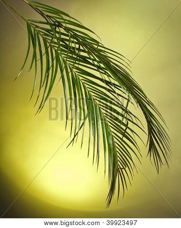 Palm branches on the colorful background