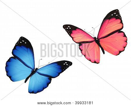 Pink And Blue Butterfly, Isolated On White Background