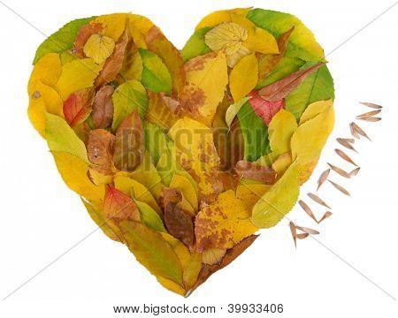 Folhas de outono brilhante mentira em forma de coração isolada no branco