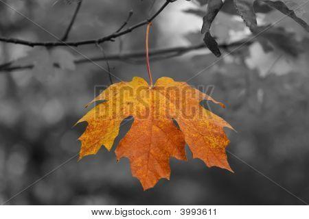 Autumn Color Leaf