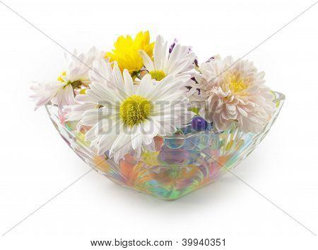 Flowers, Daisies