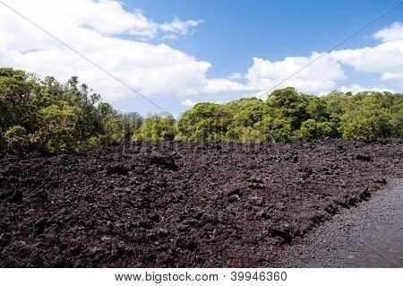 Volcanic Landscape - Rangitoto Island, New Zealand