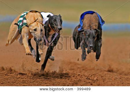 Galgos Sprint