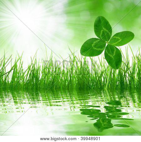 Fresh green grass with clover