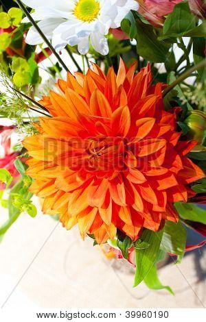 orangefarbenen und weißen Blüten
