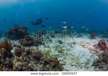 scuba santa and the reef fish