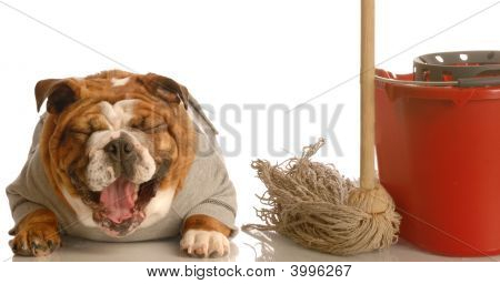 Bulldog Laughing At Mess Made On Floor