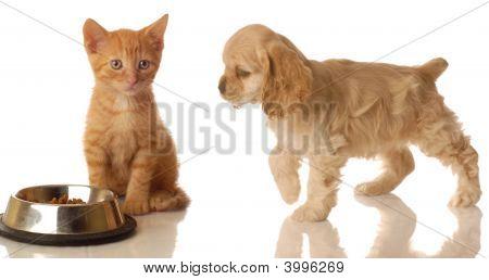 Cocker Spaniel zu Fuß in Richtung Essen Kätzchen