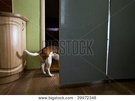 The Dog In Kitchen
