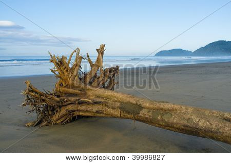 Flotsam On Tropical Beach