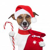 stock photo of christmas puppy  - christmas dog holding a candy stick and sack - JPG