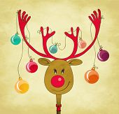 picture of rudolph  - Rudolph the Red Nose Reindeer with Christmas Tree Baubles tied to his antlers  - JPG