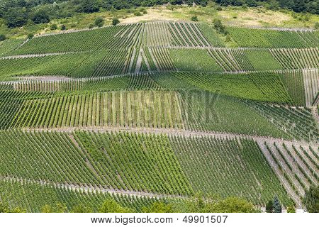 Vineyards Beilstein