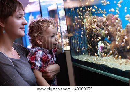 Mother And Son Watching Fishes