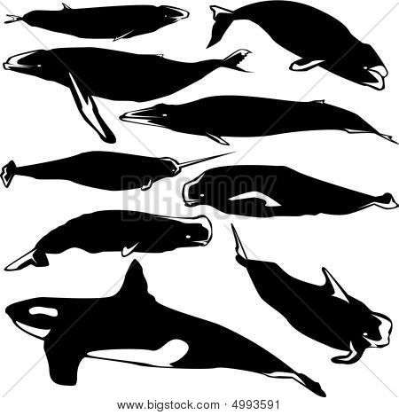 Vector Whales
