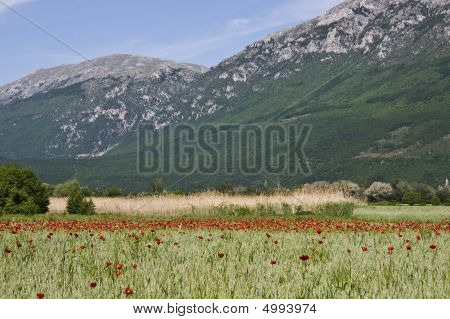 Field Of Poppies In The Mountains