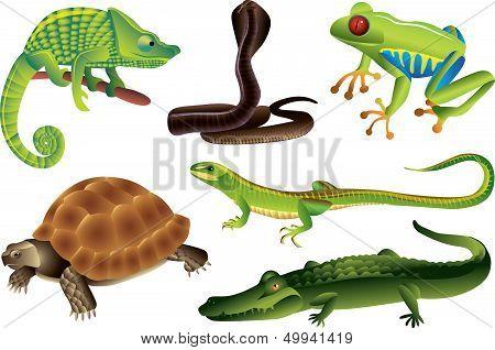 Reptiles And Amphibians Set