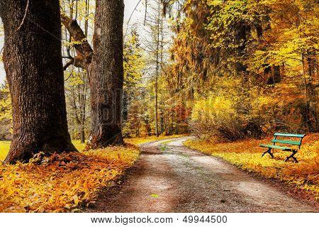 golden autumn, path in forest