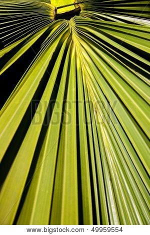 Abstract Palm Frond Leaf Texture