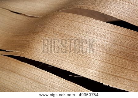 Abstract Palm Frond Wood Texture