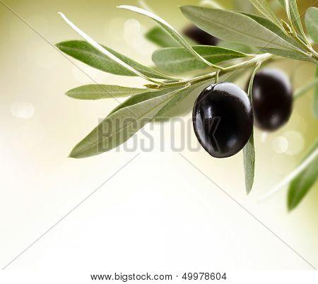 Olives. Black Ripe Olive on a tree. Food Border Design. Over White Background